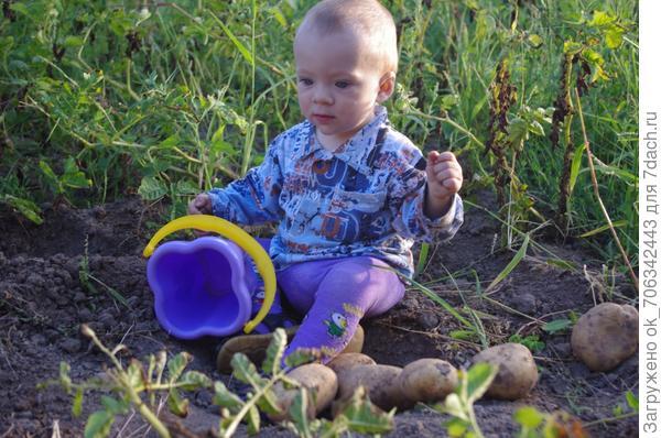 Папе я не понарошку  Помогал копать картошку: Пол ведра – мой ценный вклад, Не картошка – просто клад!