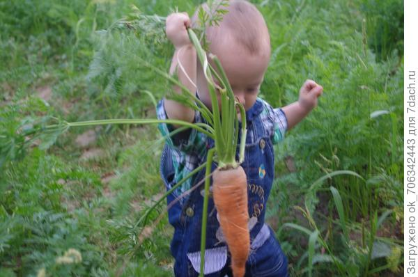 Вот и выросла на грядке сладкая морковка. И на вкус уж очень сладка, откусить дам Вовке!