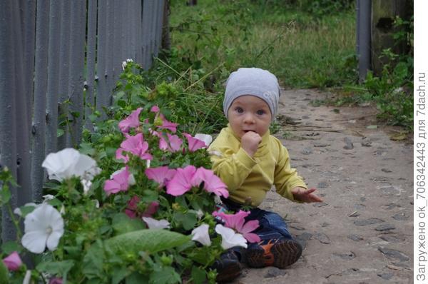 """- Отчего зацвел цветок?"""" - Мальчик спрашивает мать. - Оттого, что мы цветок Не ленились поливать."""