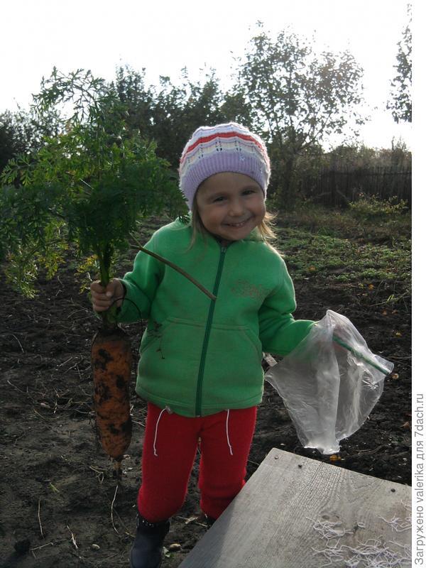 Вот какую морковку я вырастила!!!