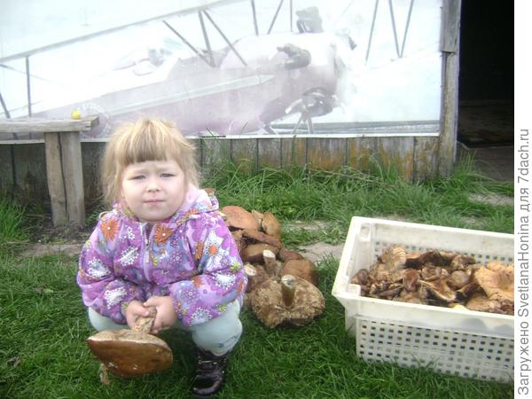 Помощница Ксения помогла собрать грибы
