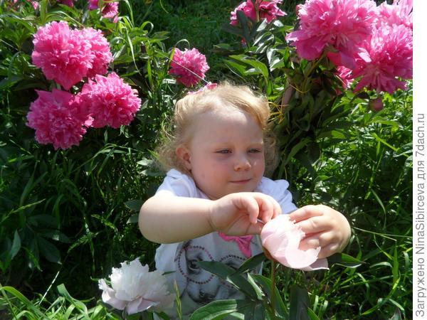 Ребёнок в первый раз в жизни увидел пион
