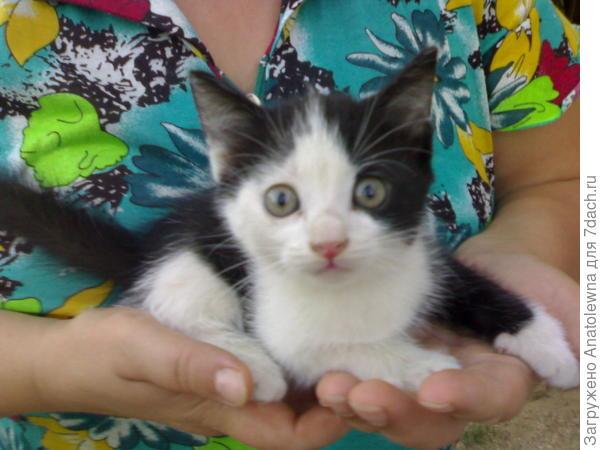 Чёрно-белый котик