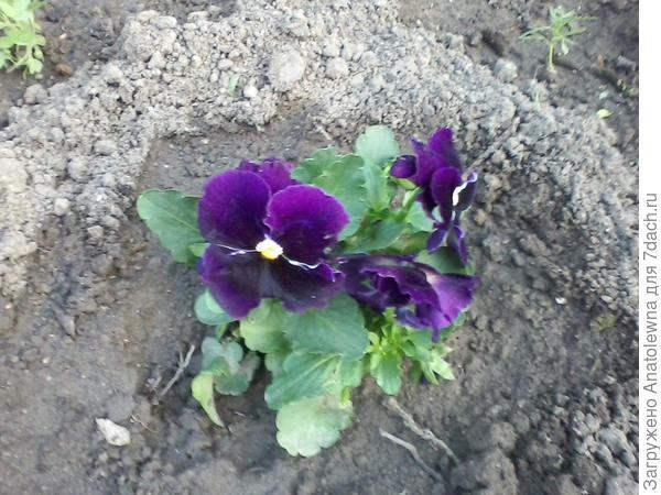 и вот такие цветочки