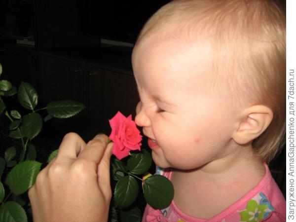 Ребенок нюхает розу