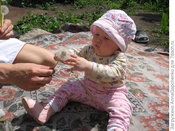 ребенок трогает одуванчик