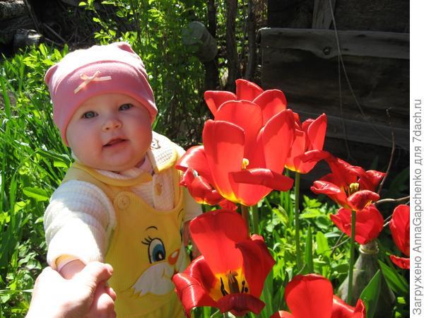 Ребенок возле тюльпанов