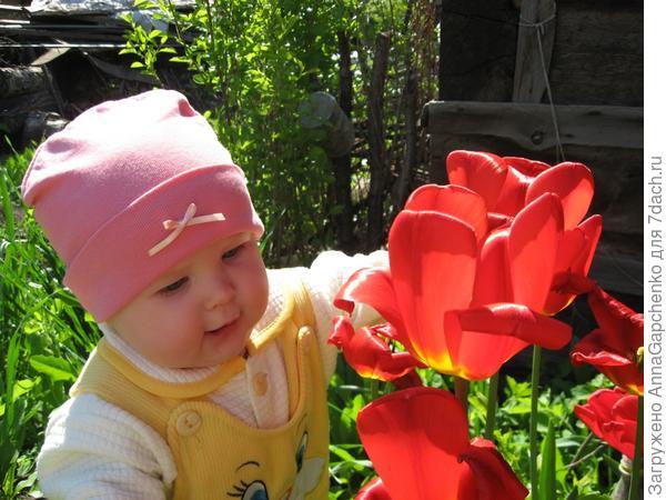 Ребенок в тюльпанах