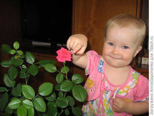 Ребенок и домашняя роза