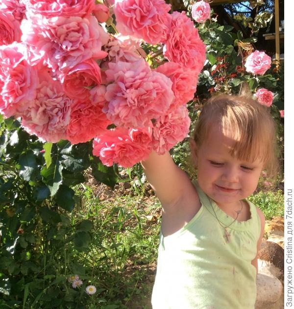 Привет! Я Арина мне 2 годика, это я на даче, а это мои любимые цветы...