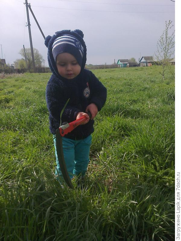 кошу траву около дома