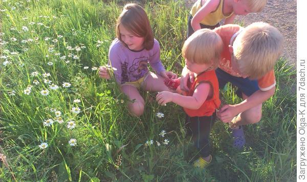 Дети с ромашками