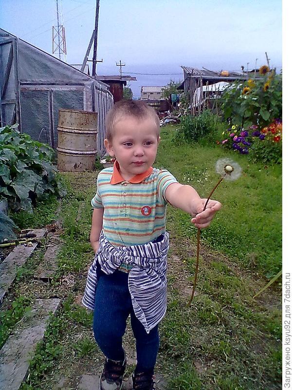 Дарит одуванчик)))