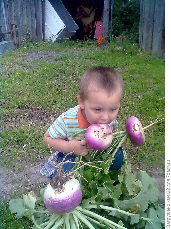 Собирает урожай)))