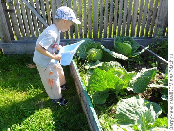 Егор поливает капусту