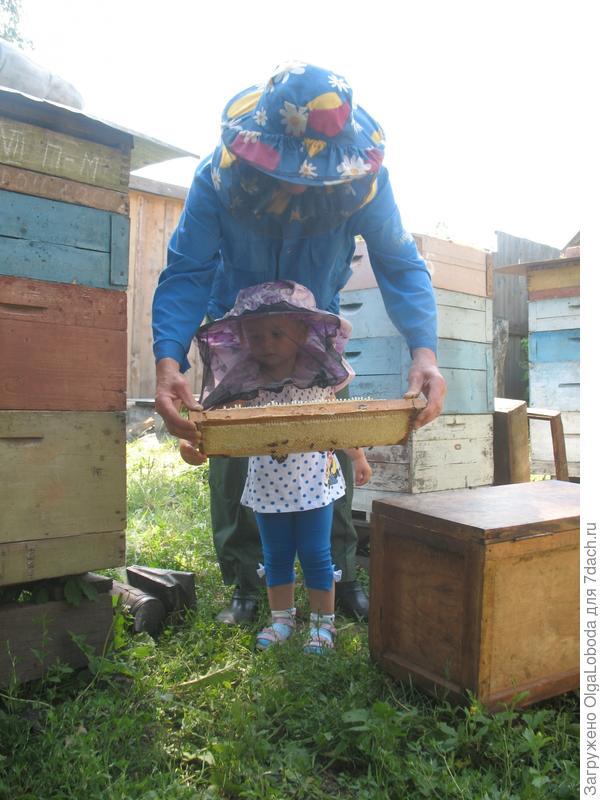 Нелегкий труд пчеловодов
