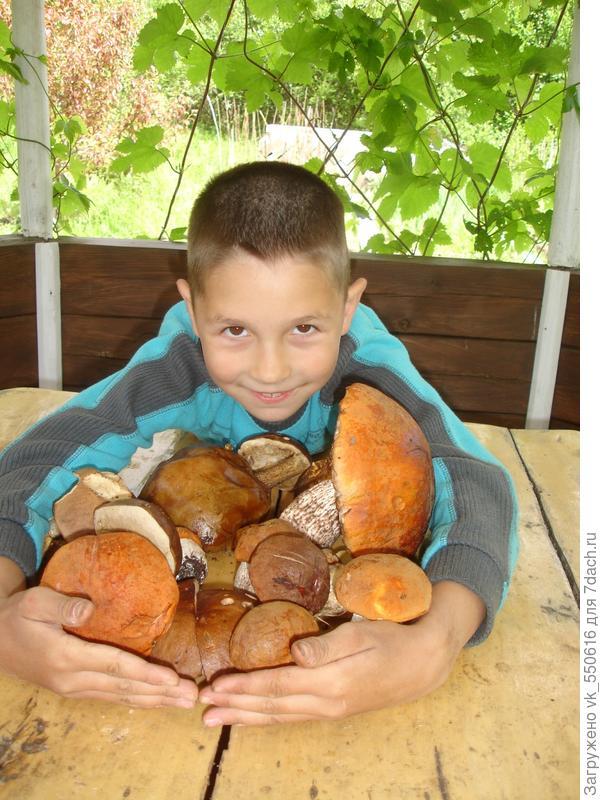 Пока Саша собирал грибы, Паша собирал клубнику))