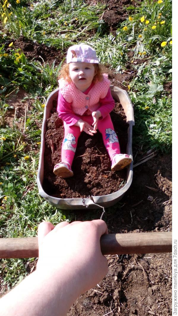 помогаем маме и папе возить землю.