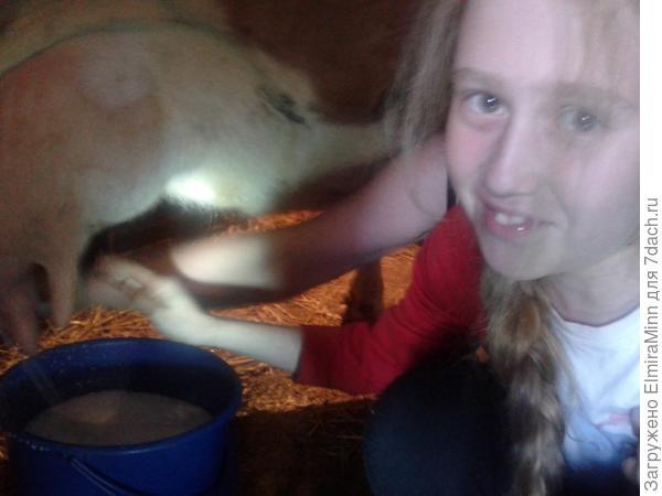 Учимся доить корову!