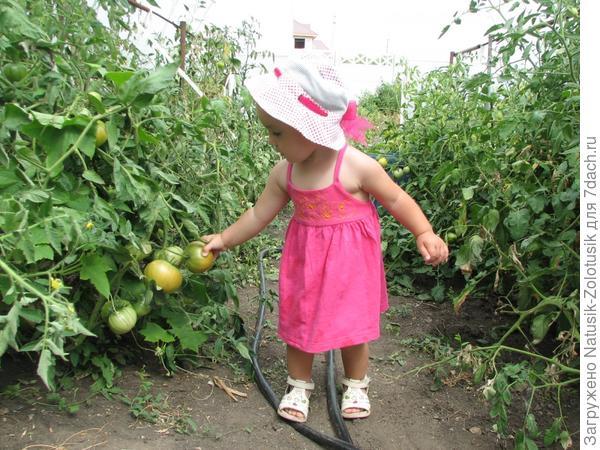 Настенька помогает собирать урожай