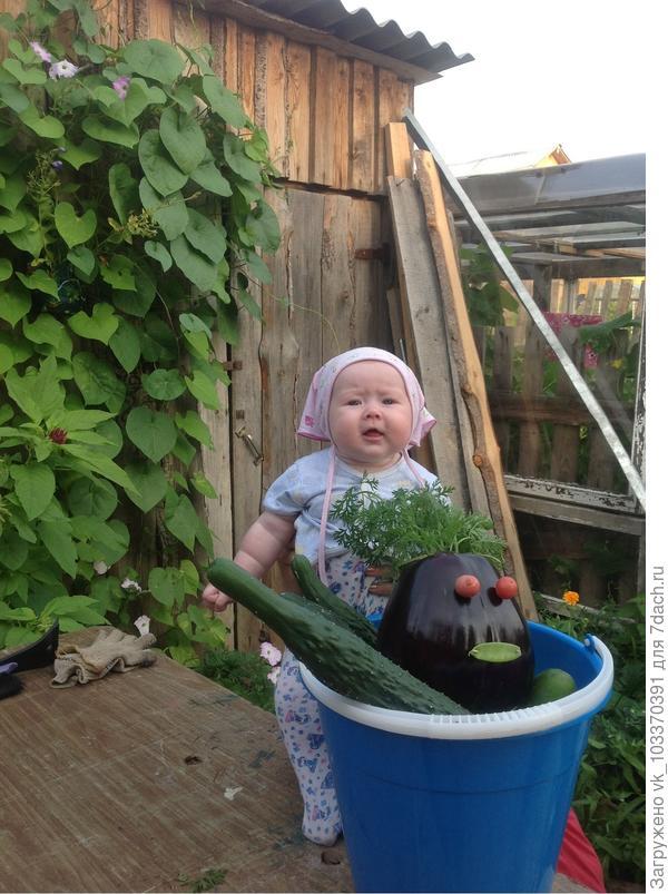 Василиса и урожай