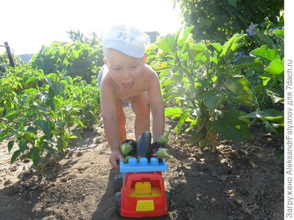 Внедрены инновационные методы доставки овощей!