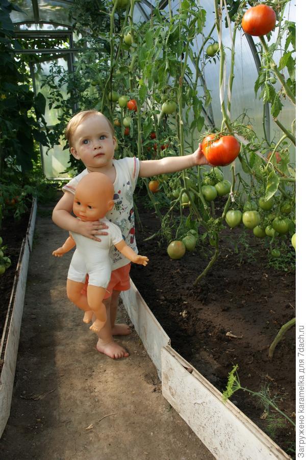 Помогаю собирать урожай