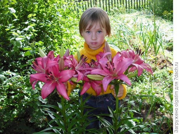 Полина и лилии