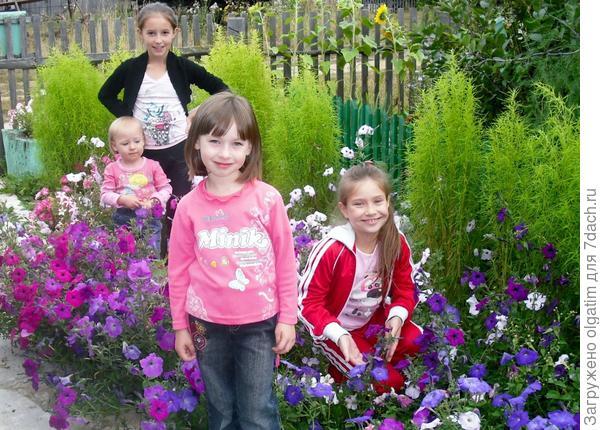 Наши цветочки