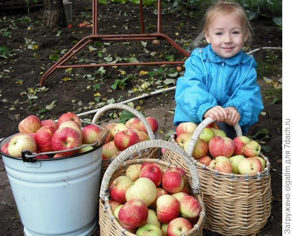 Яблочный год