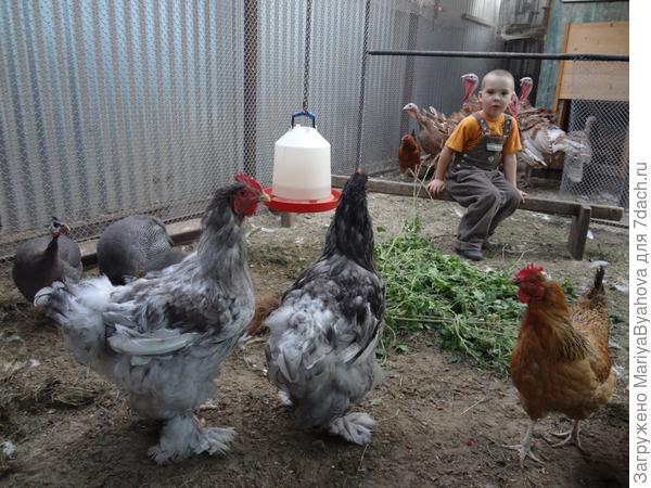 Костя кормит птиц