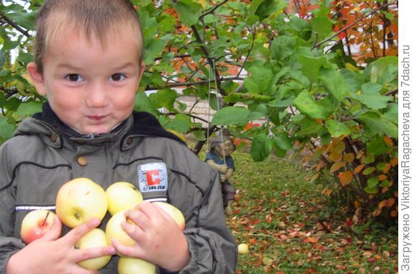 Славик собирает яблочки