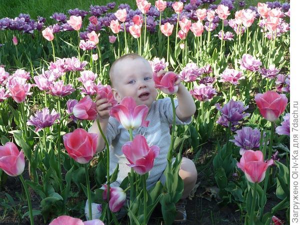 Тюльпаны, тюльпаны....
