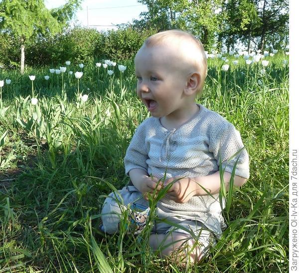 Костик на траве