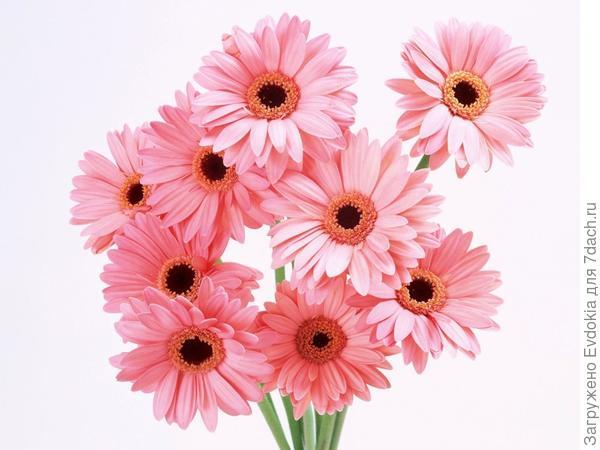 Цветы победителям