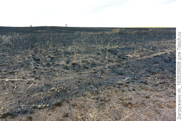 Выжженная трава