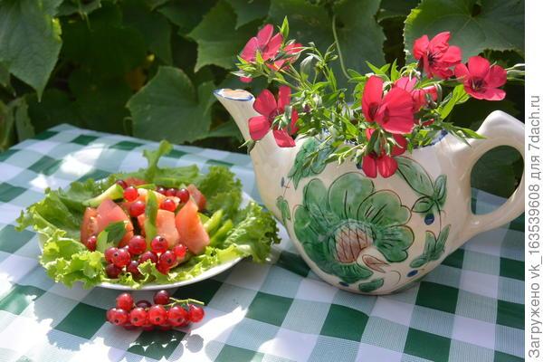 Салат из помидоров, огурцов и свежей зелени с красной смородиной. Пошаговый рецепт с фото