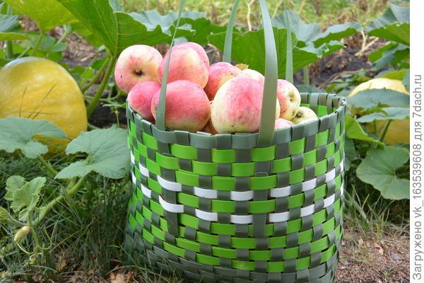 Чудодейственный свойства домашнего яблочного уксуса