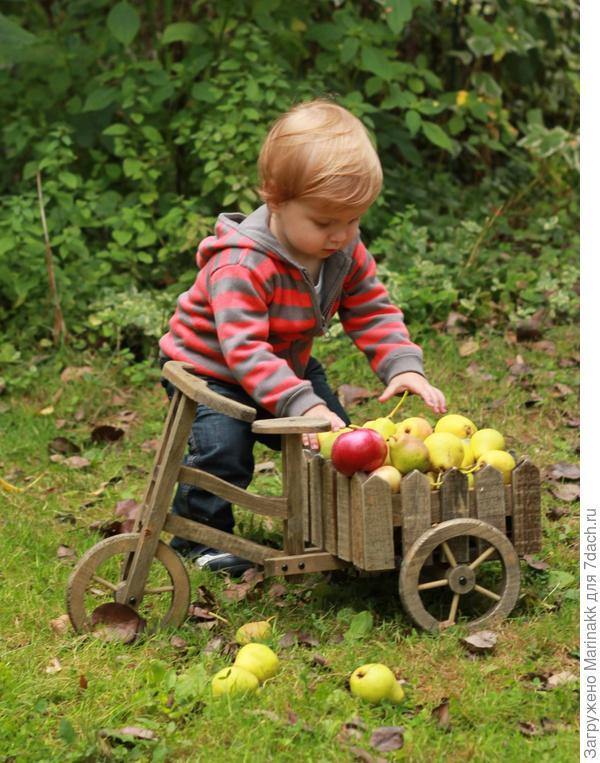 А еще я собираю груши.Небывалый урожай!