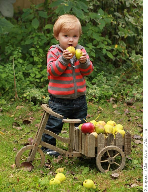 кто не знает: груши это такие желтые мячики,ими можно поиграть!