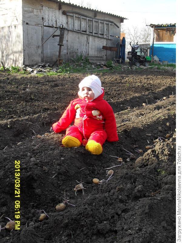 доча садит картоху