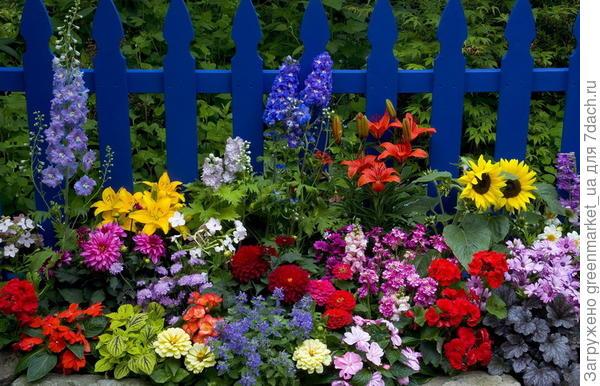 разноцветный сад