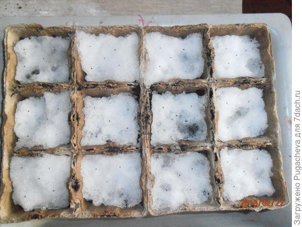 горшочки с семенами на снегу