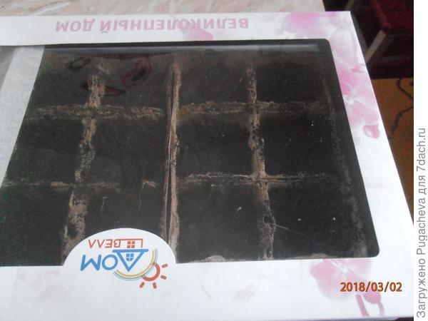 горшочки укрытые прозрачной коробкой