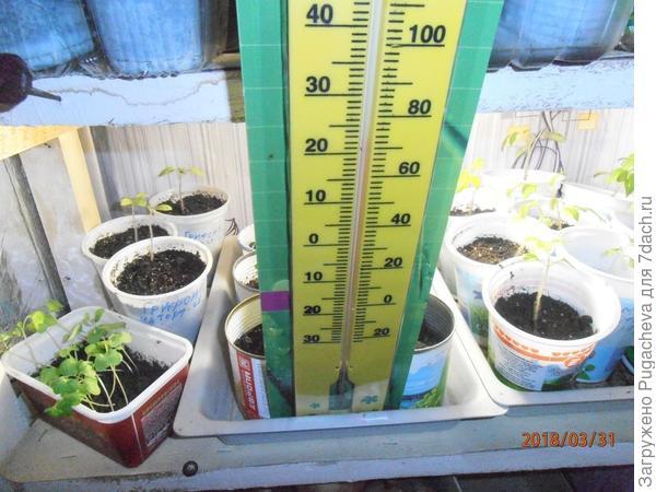 термометр показывающий дневную температуру