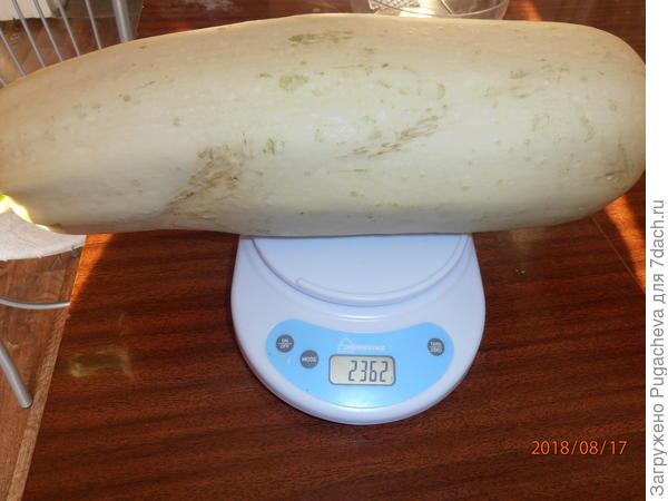 вес-2362 гр.