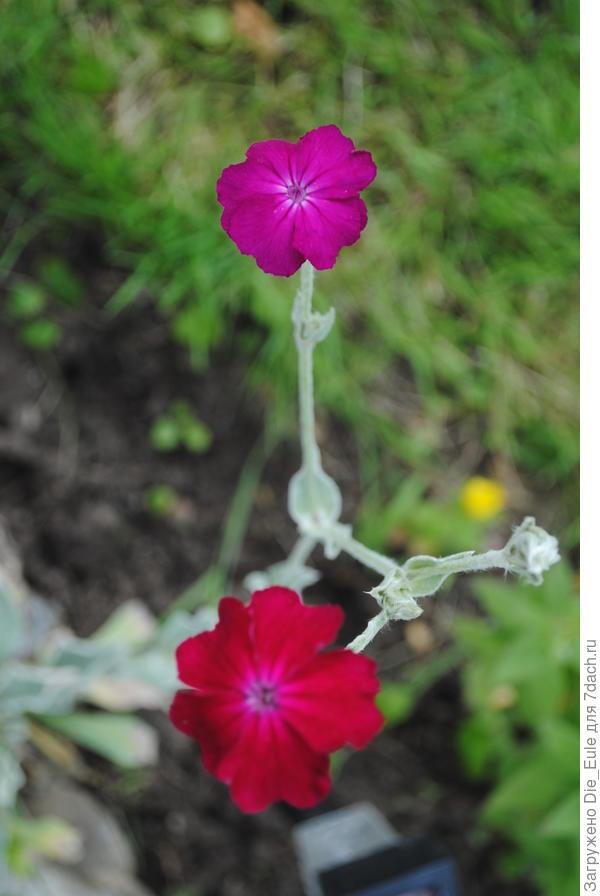 неизвестный цветочек