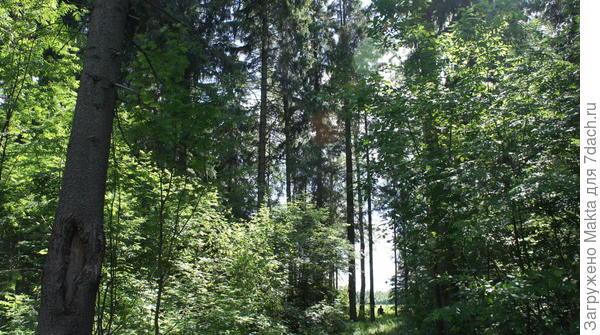 Чудный летний лес