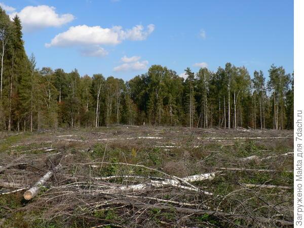 Площадь обезображенного вырубкой леса впечатляет