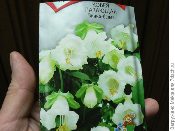 Пакетик семян кобеи